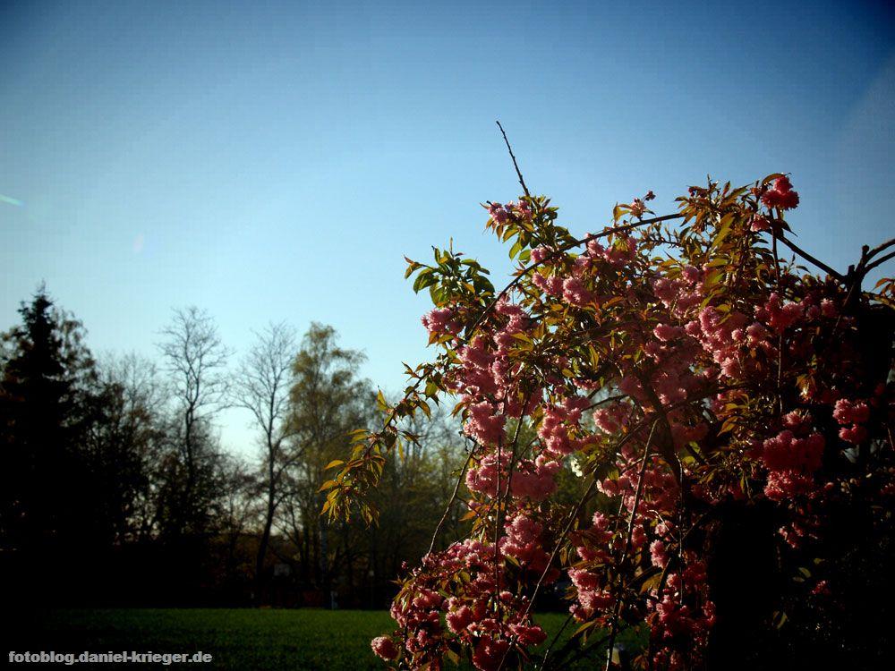 blumenbaum_lomo.jpg