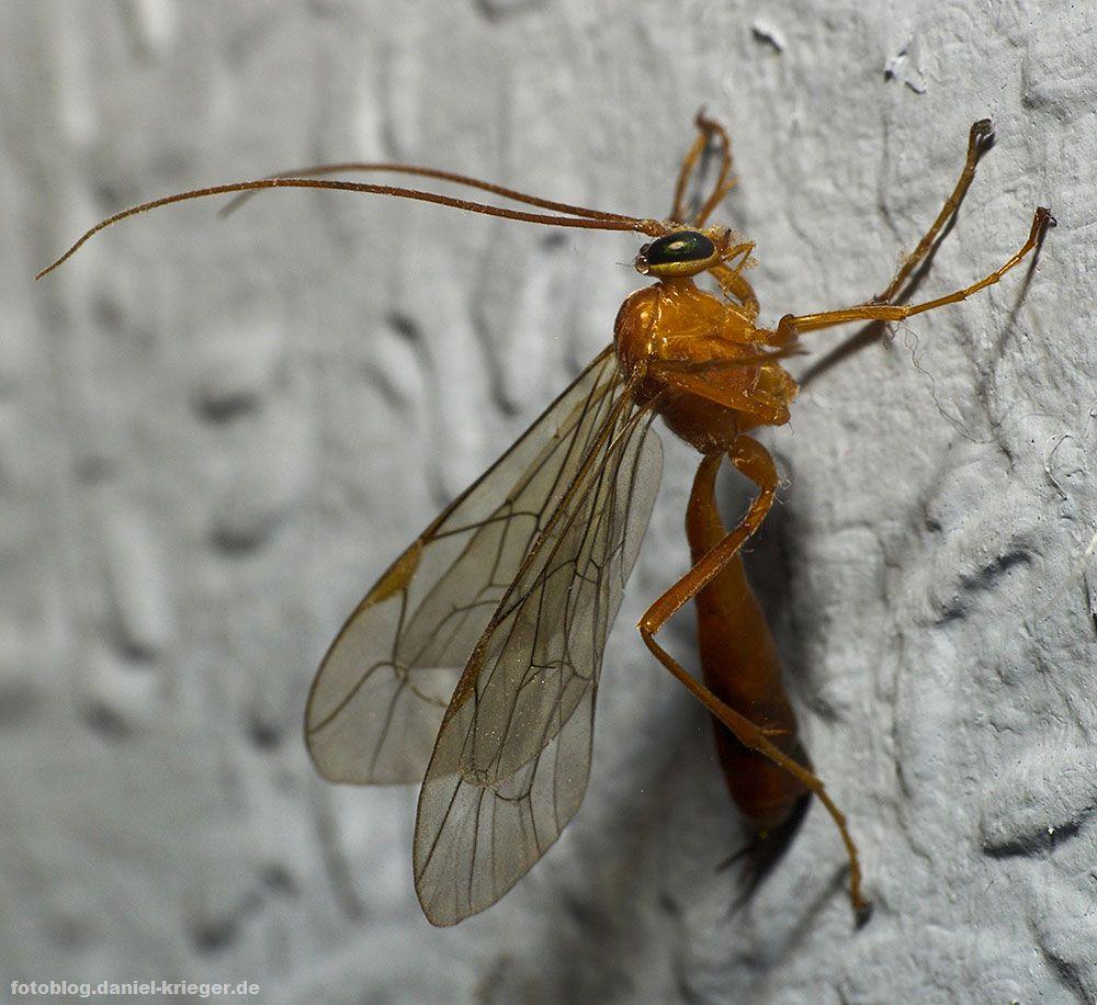 insekt1
